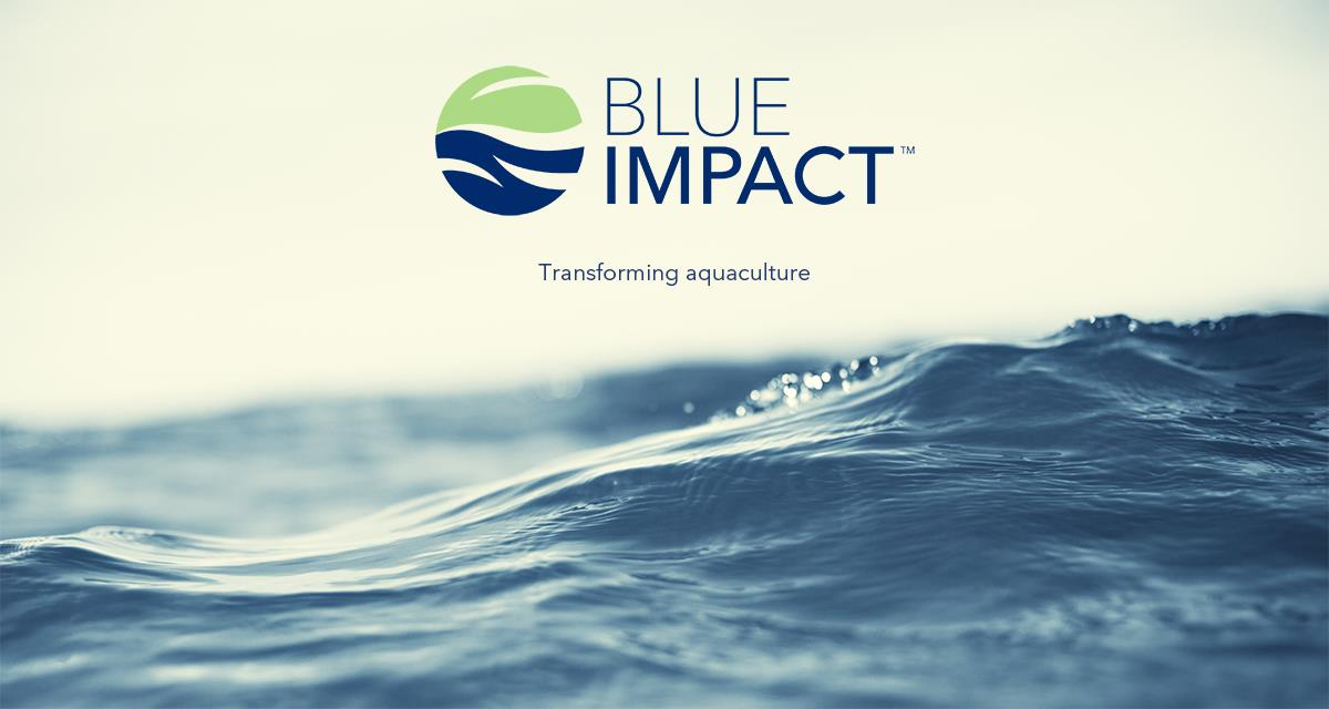 BioMar launches Blue IMPACT™, a feed concept that minimises the environmental impact of aquaculture. The first feed in the series addresses the challenges faced by cage farming in the Baltic Sea area by aiming to reduce total phosphorus in the feed.